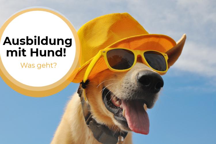 Ausbildung mit Hund – Berufe für Fellnasenfreunde