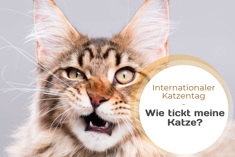 Wie tickt meine Katze? – Die Ausbildung zum Tierpsychologen