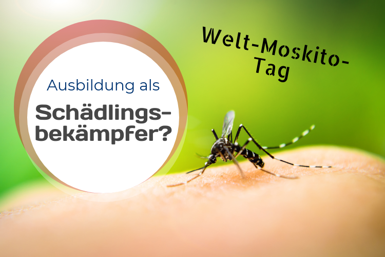 Welt-Moskito-Tag – Schädlingsbekämpfer räumen auf!